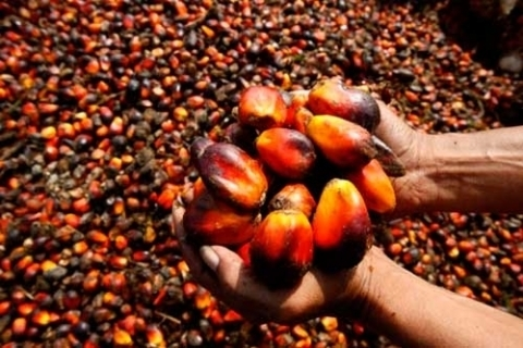 Malaysia's Ominous Warning to Europe in the Face of Renewed Efforts to Discriminate against Palm Oil