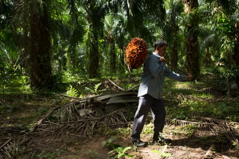 Anti-Palm Oil Campaign Dressed Up As 'Certification'